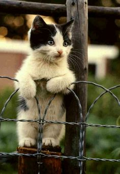 Cat on a wire fence (by Dreek Leeds on Flickr)