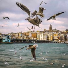 #Seagulls of #Istanbul .. .. #Galata #Tower #oneistanbul @oneistanbul by me.tiryaki