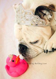Princess English Bulldog and Princess Rubber Duckie - Divas - Piper The Painting Bulldog - Sleeping Bulldog Photo - Cute Dog Photo - 5x7 on Etsy, $8.00