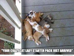 Crazy cat memes | crazy-cat-lady-starter-pack