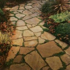 what to put in between flagstones pinterest flagstone path