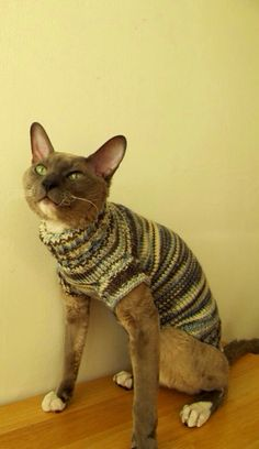 Cat wearing a knitted sweater Cat Sweaters, Pet Clothes, Wool, Pets, Handmade Gifts, Jumper, Animals, Vintage, Friends