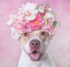EstiloDF » ¡Los perros con coronas de flores que enloquecen a las redes!