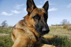 If you are looking for any Indian names for your dog, we've covered all the best names to inspire you naming your beloved dog.