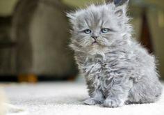 Kitten or Old Man?