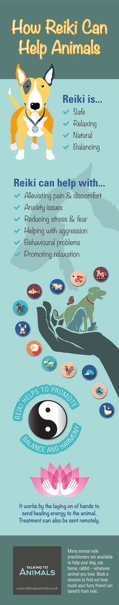Look on this Infograph to see 'How Reiki Can Help Animals'; for more information about reiki and animals, click on the pin.
