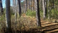Trail running, Bluffton SC