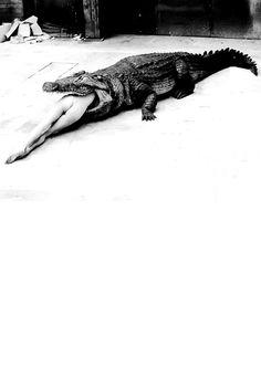 Crocodile Eating Ballerina, from the Pina Bausch Ballet 'Keushleitslegende', Wuppertal, 1983