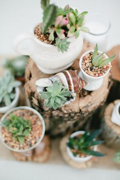 succulent centerpieces // photo by Mallory Morgan Photography // http://ruffledblog.com/west-texas-cornfield-wedding