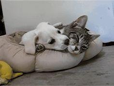 You Bite Me, I Bite You!