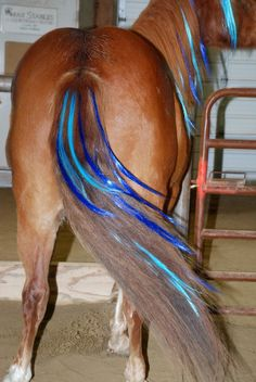 I know this is kinda dumb but I want some so bad for my horses lol....maybe some nice greens or reds for my prince.