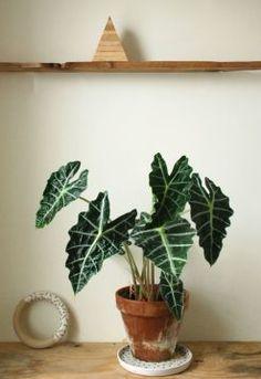 Plant Stand Arizona