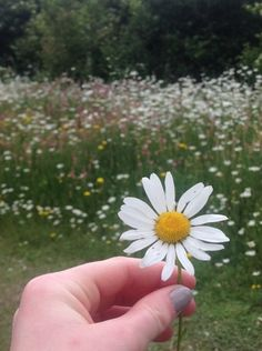 Found this huge daisy! Love this photo I took! #thatsbeauty