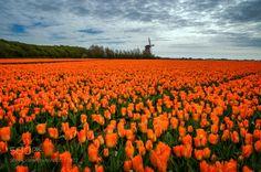 Orange by klaasfidom #Landscapes #Landscapephotography #Nature #Travel #photography #pictureoftheday #photooftheday #photooftheweek #trending #trendingnow #picoftheday #picoftheweek
