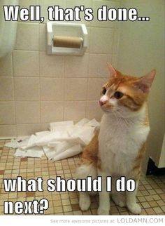A Cat's To-do List…funny Toilet Paper Ruined By Cat - Click for More...