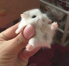 Imagen de animal and hamster