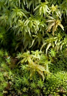 Mosses: my favourite part of the forest!