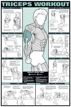 Arm Exercise Workout Chart | TRICEPS ARM WORKOUT Wall Chart Poster - Fitness, Gym, Workout, Health ...