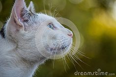 Opinión del perfil del gato