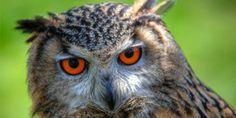 Petícia: Dopyt vládu, podniká kroky, aby Prietok vody do oblastí, kde vodné vtáky Plemeno