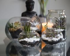 10 Common Terrarium Mistakes and How to Avoid them