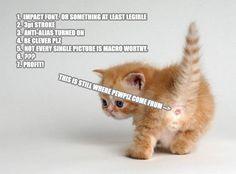 Funny Cat Quotes. QuotesGram by @quotesgram