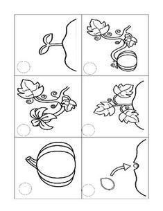 Pumpkin Life Cycle. $