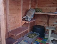 All sorts of rabbit housing idea for you to view. Great ideas, lots of fun and ways to make your bunnies' housing an attractive feature in the garden/home as well as a fantastic environment for. Rabbit Hutch And Run, Rabbit Shed, Rabbit Hutch Plans, Outdoor Rabbit Hutch, Bunny Hutch, Indoor Rabbit, Rabbit Run, Rabbit Hutches, Pet Rabbit