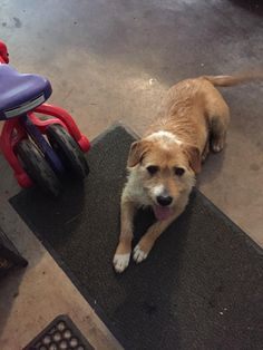 Found Dog - Mix - Conyers, GA, United States 30094 on April 13, 2016 (07:00 AM)