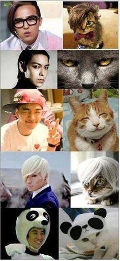 I see no difference... BIGBANG #kpop #humor