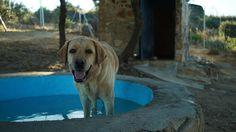As férias sonhadas (pelos cachorros)   Internacional   EL PAÍS Brasil