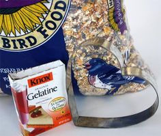 For the love of birds  Homemade bird feeders not only help our feathered friends, but making them is a fun family activity perfect for cold winter days!