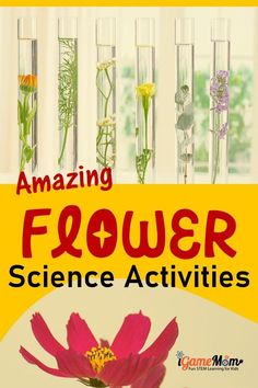 Flower science projects for kids to learn plant life cycle, colors, water absorption, lights, … fun STEM activities for Valentine Day, Mother's Day, spring and summer science experiments at home backyard or kitchen, school class project and science fair project