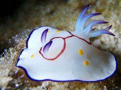 アンボン ダイビング1 : Dive Blogバリ島のダイビング-情報&Be here now