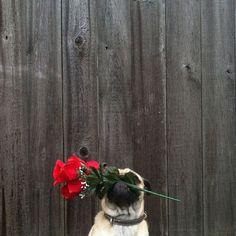 Meet Norm Dog-8
