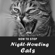 Here's a Quick Way to Stop Cat Litter Tracking Forever | Easyology Pets