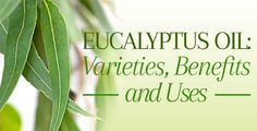 Eucalyptus Oil Benefits and Uses - For Pain Relief and Skin Care Eucalyptus Oil Benefits, Types Of Eucalyptus, Eucalyptus Essential Oil, Organic Essential Oils, Lemon Essential Oils, Sinus Congestion, Decongestant, Plant Care, Health Remedies