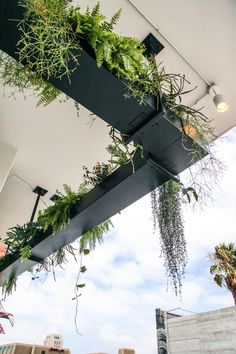 Ferns and other foliage plants spill over the sides of this hanging planter, which lines the edge of Bracero Cocina de Raiz, a Mexican restaurant in San Diego.