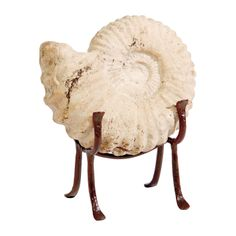 Christmas gift ideas. Seashell on Stand - Ethan Allen US