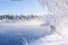 Kuuraa ja vesihöyryä - Itämeri Pohjanlahti Pohjanmaa Selkämeri helmikuu jäätön koivu koivut kuura kuurainen kuuraiset koivut kylmä lumi luminen maisema meri metsä pakkanen pakkaspäivä puu puut sinitaivas sula talvi valkoinen vesi