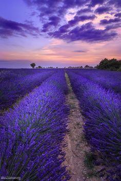Lavender fields in Valensole, Provence, France (Photo: Maxence Boyer Photo - Beautiful Sky, Beautiful World, Beautiful Landscapes, Beautiful Flowers, Beautiful Places, Beautiful Pictures, Lavender Fields, Lavender Flowers, Purple Flowers