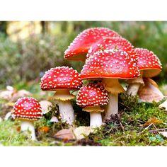 mushrooms | blue - green | Wald, Pilze und Herbst