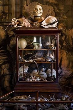 I would love to have a Curiosity Cabinet for my growing collection of macabre items :-)