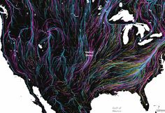 These Amazing Maps Show How Wildlife Will Migrate to Survive Climate Change  The blue, pink and yellow lines represent the projected paths of birds, mammals, and amphibians, respectively, as they make their way north to cooler climates. Map: Dan Majka