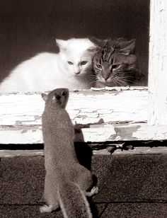 Oh là ! un intrus...... Non non ! ce n'est qu'un petit écureuil qui voudrait qu'on aille jouer avec lui...