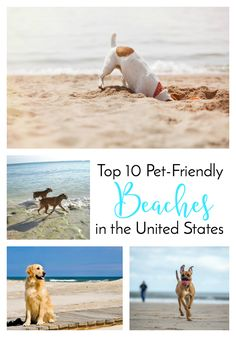 Top 10 Pet-Friendly Beaches in the United States | http://www.thelazypitbull.com/pet-friendly-beaches-united-states/