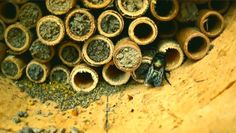 Watch this cool micro documentary about #masonbees :) #LoveBees