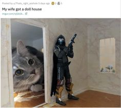 My wife got a doll house : aww Cat Memes, Funny Memes, Hilarious, Funny Cat Pictures, Cute Pictures, Giant Cat, Cute Funny Animals, Funny Cute Cats, Animal Memes