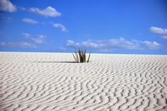 White Sands Desert, New Mexico, US. Photo credit by David Cohen