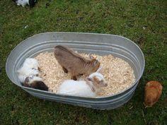 baby animal petting zoo??